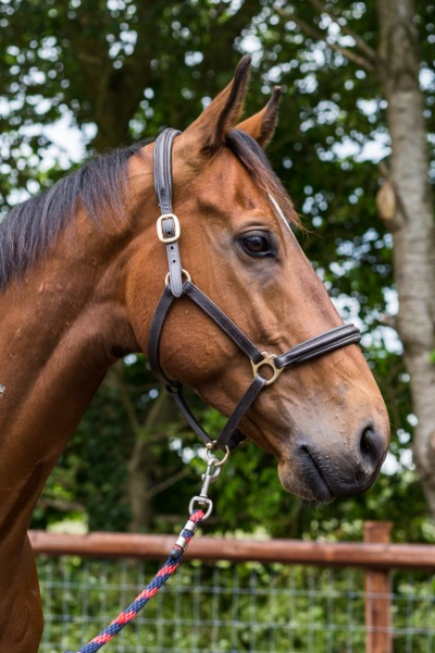 Retired racehorse, Golden Hour, For Sale