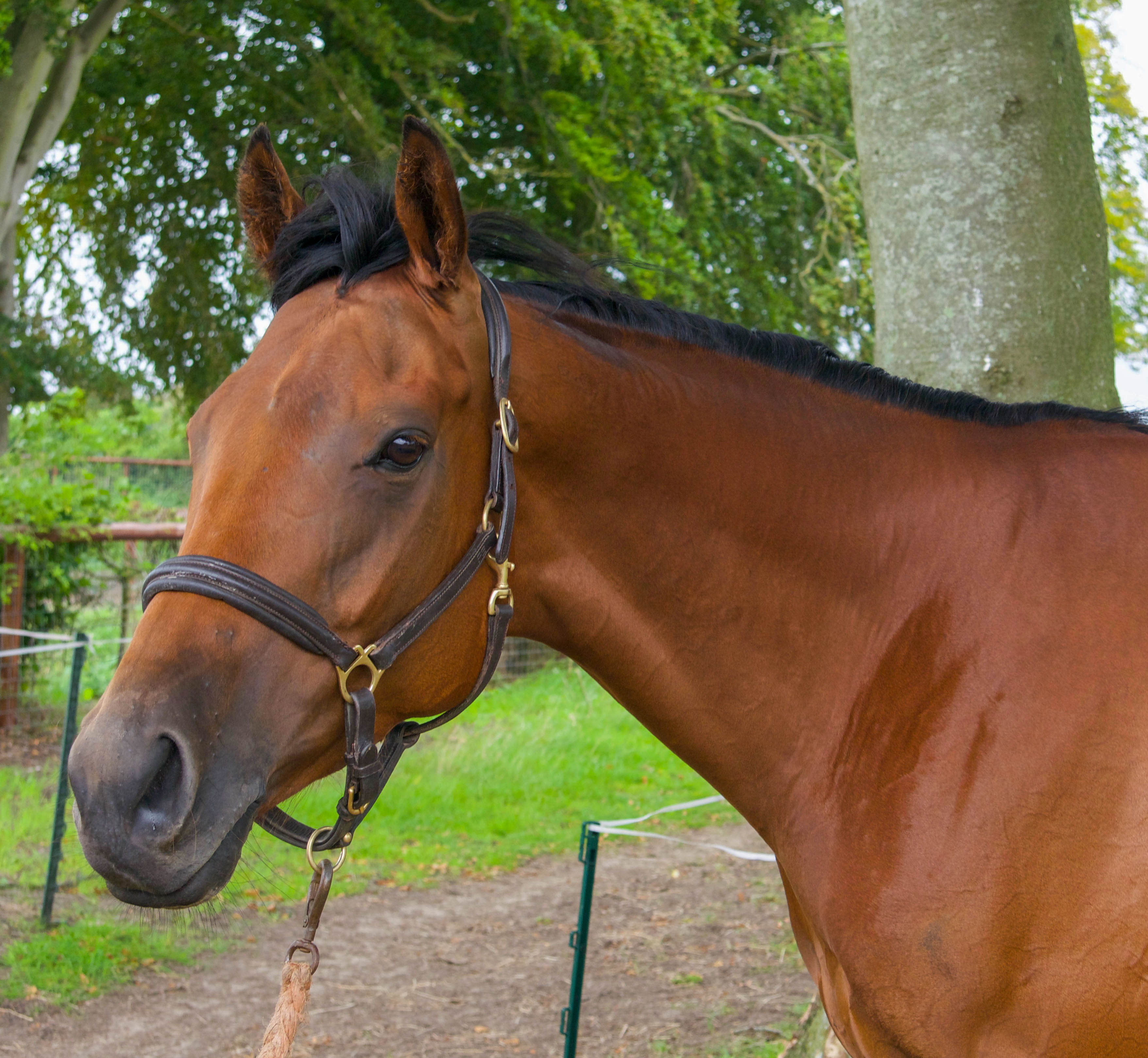 New horse: Sixth of June arrives into the yard